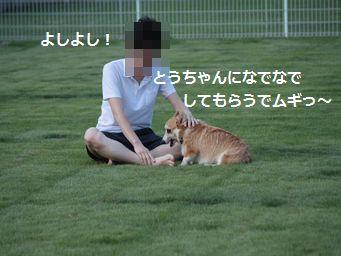 IMG_2703むぎ12