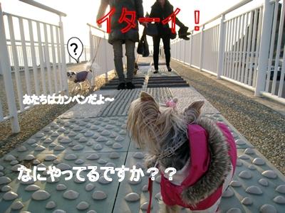 123江ノ島6