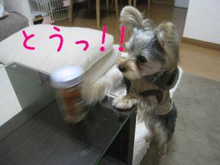 mini_IMG_3288.jpg