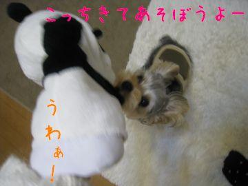 mini_IMG_3933.jpg
