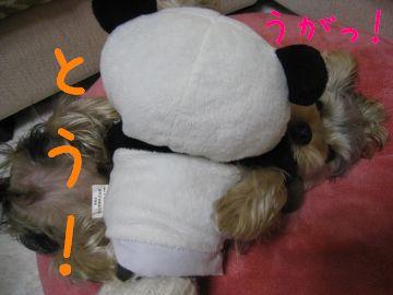 mini_IMG_3941.jpg