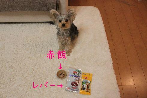 mini_IMG_5441.jpg