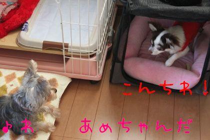 mini_IMG_6318.jpg