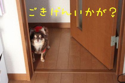 mini_IMG_6320.jpg