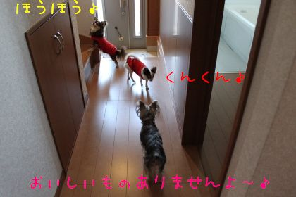 mini_IMG_6329.jpg