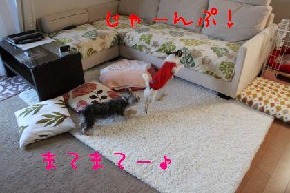 mini_IMG_6334.jpg