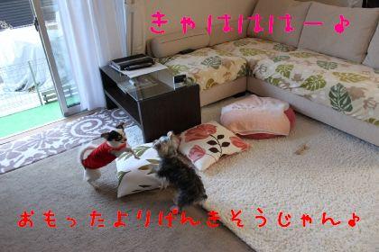 mini_IMG_6338.jpg