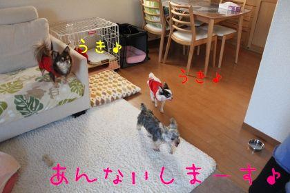 mini_IMG_6344.jpg