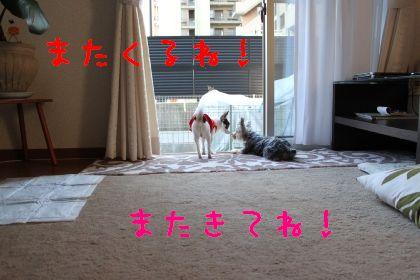 mini_IMG_6351.jpg