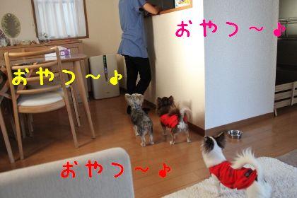 mini_IMG_6364.jpg
