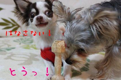 mini_IMG_6378.jpg