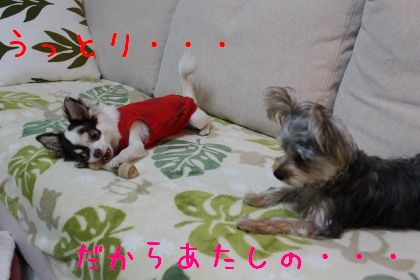 mini_IMG_6381.jpg