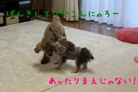 mini_IMG_6694.jpg
