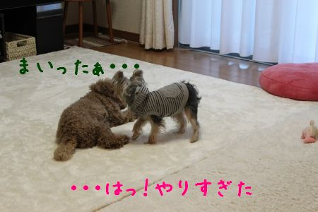 mini_IMG_6700.jpg