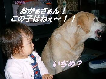 20051201113125.jpg