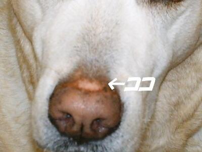 20060721154104.jpg