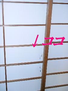 20070511163040.jpg