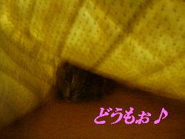 20070525111604.jpg