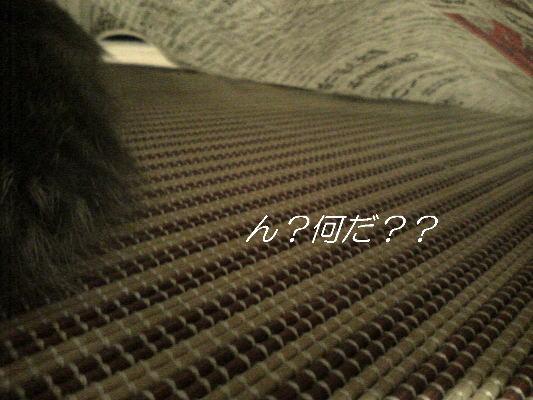 20071029132035.jpg