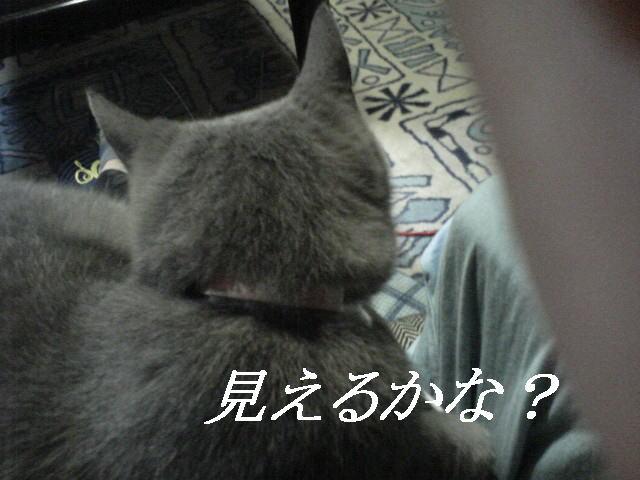20071114141803.jpg