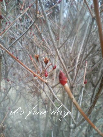 春を待つ1