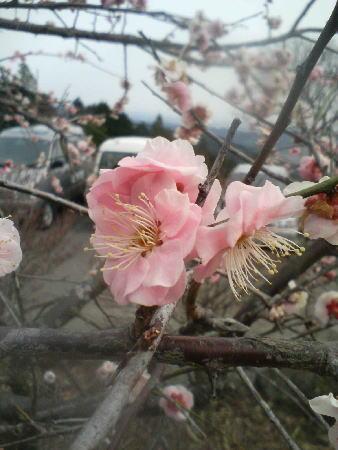 春を待つ2