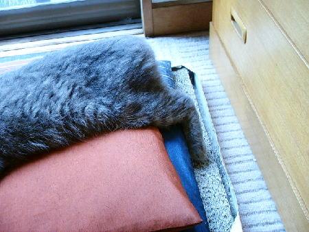 座布団で寝る2