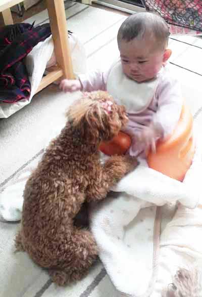 ベビー&あずき②