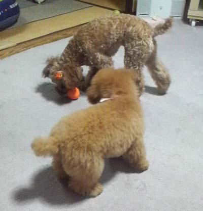 おもちゃの取り合い①