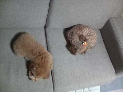 疲れた2匹