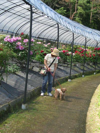 花しょうぶ園で③