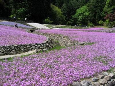 花のじゅうたん①