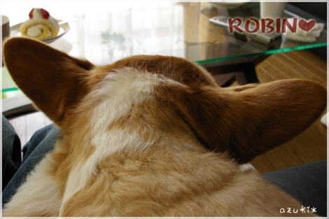ROBIN003*