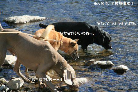 009_20110126011947.jpg