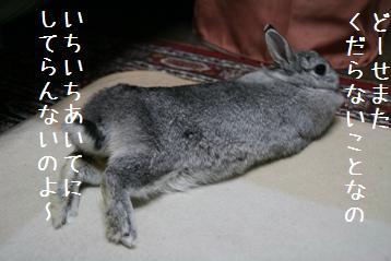 20080913_6.jpg