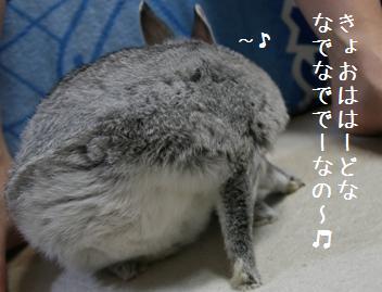 20080915_1.jpg
