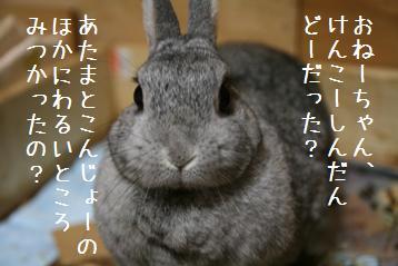 20080926_1.jpg