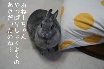 20081005_8.jpg