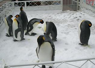 海遊館★ペンギン