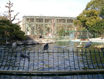 天王寺動物園★アシカと鳥たち