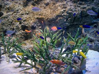 エプソン品川アクアスタジアム 熱帯魚