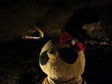 ばぶ隊長の蝙蝠穴探検