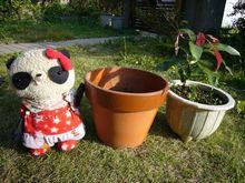 11月29日鉢を植え替えた