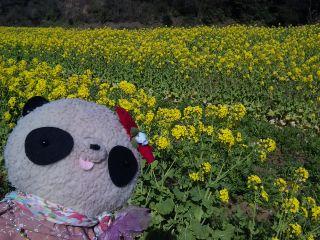 菜の花畑ロケ
