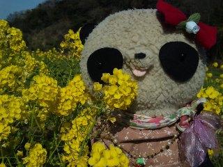 菜の花とB氏