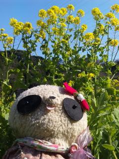青空と菜の花とサングラス