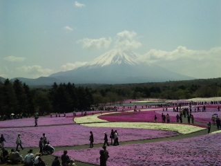70万株の芝桜