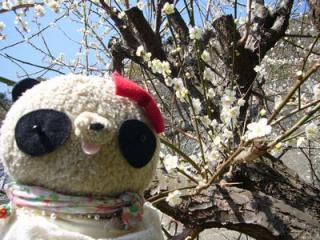ばぶちゃんと梅の花