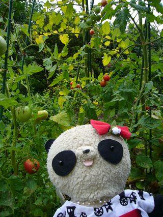 トマトとおばぶ