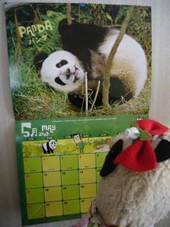 5月はパンダ